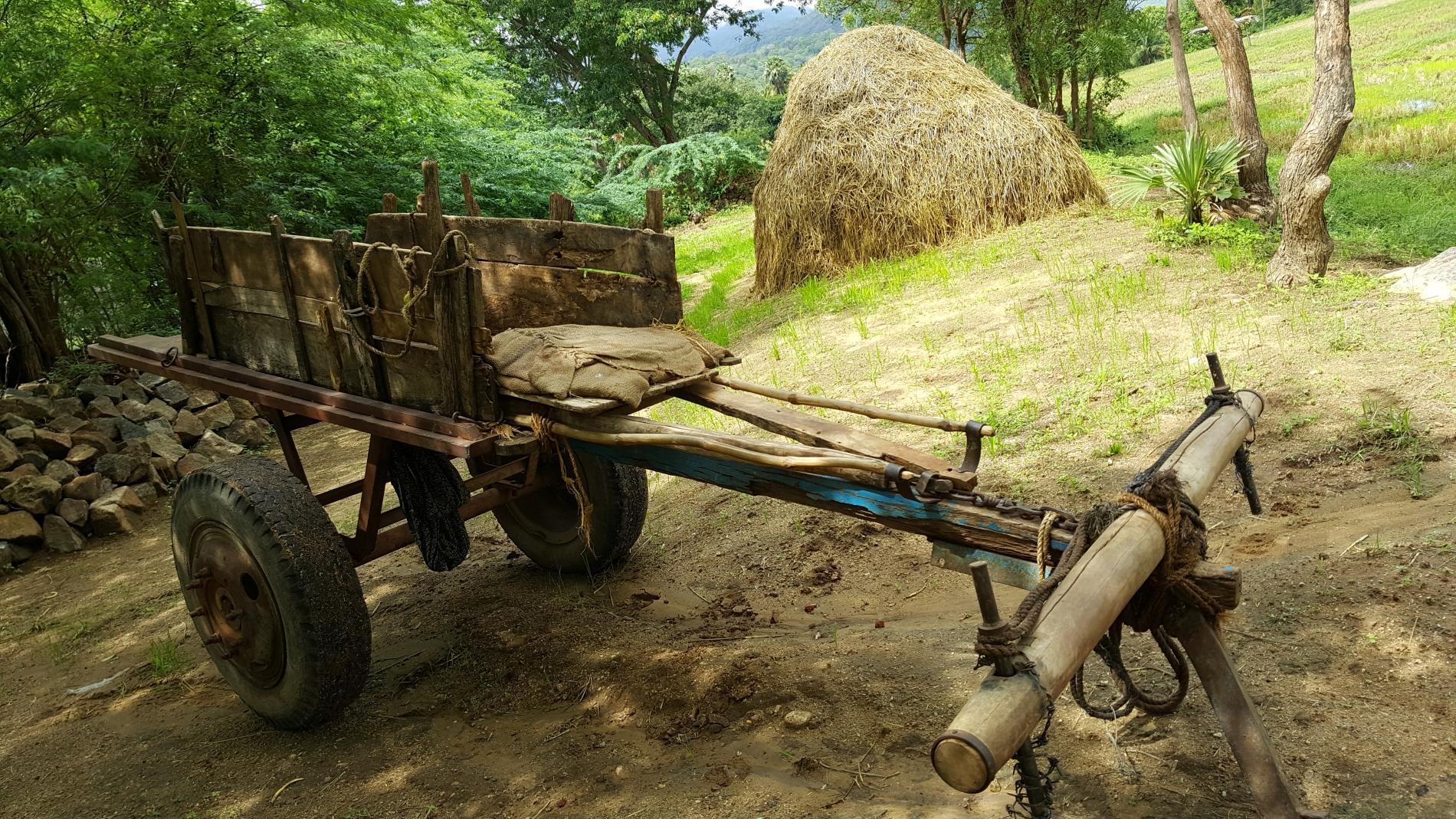 Erfolgreich im Kampf gegen Dürre